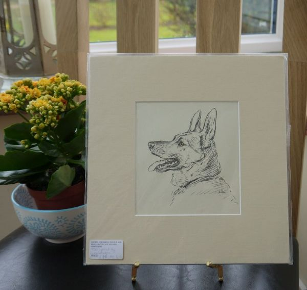 Alsatian -Al D1b -  head in profile 1930's print by Lucy Dawson